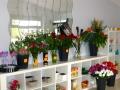 eliza_blooms_interier_obchodu