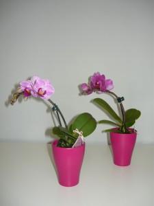 Mini orchidea4